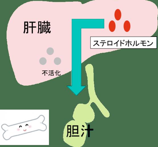 liver 7