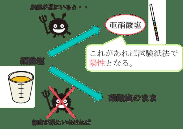 Urinalysis figure1