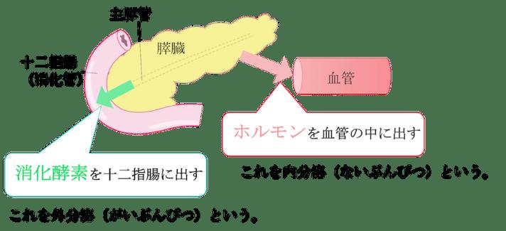 role of pancreas4