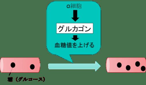 role of pancreas7