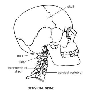 Cervical Spine   Diagram   Patient