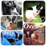 Foster Oreo