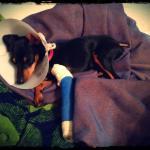 Healing with a splint on