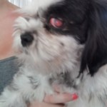 Molly's injured eye