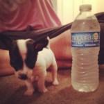 Oreo is so tiny!