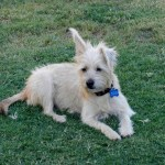 Frankie, Terrier Mix