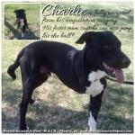 Charlie, March 24th!