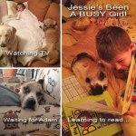 Jessie, Boxer-Shepherd mix - Medical Animals In Need (2)
