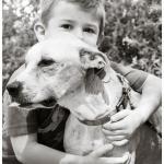 Jessie, Boxer-Shepherd mix - Medical Animals In Need (32)