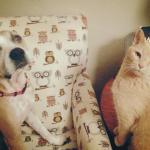 Jessie, Boxer-Shepherd mix - Medical Animals In Need (33)