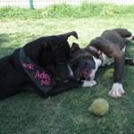 Buster & pal