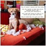 Penelope--dogshaming