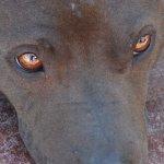 Sasha Close Up