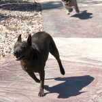 Sasha and Lizzie on the run