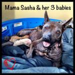 Sasha and babies, March 18th