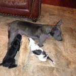 Sasha & pups