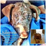 Julienne1