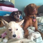 Blossom and her foster pals