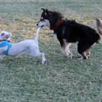 Wiley and Yuno having fun