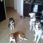 Yuno and his pals