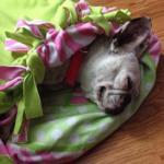 Penelope loving her foster home