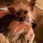 Alvin in foster3