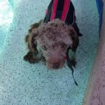 Millie, June water therapy
