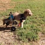 Millie's cart