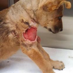 Jasper's wound