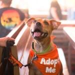 Piper, adopt me!