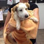 Austen at the vet