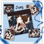 Joey! Sept. 2014