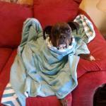 Pixie in foster