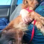 Simon on the way to foster