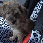 Skeeter on the ride to his foster house