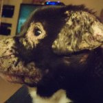 Winnie in foster