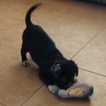 Winnie is all puppy!