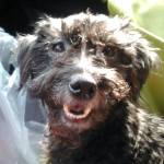 Gidget is happy to be rescued!