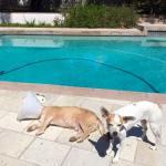 Baxter sunbathing