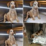Spencer at the shelter