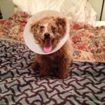 Mortimer, Medical Animals In Need (2)