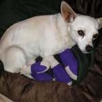 Beverly - Medical Animals In Need (6)
