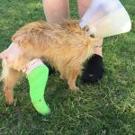 Hudson - Medical Animals In Need (18)