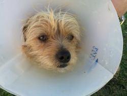 Hudson, Terrier Mix