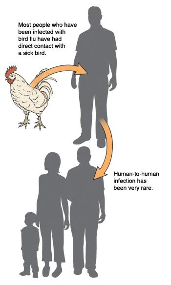 Avian Influenza (Bird Flu)