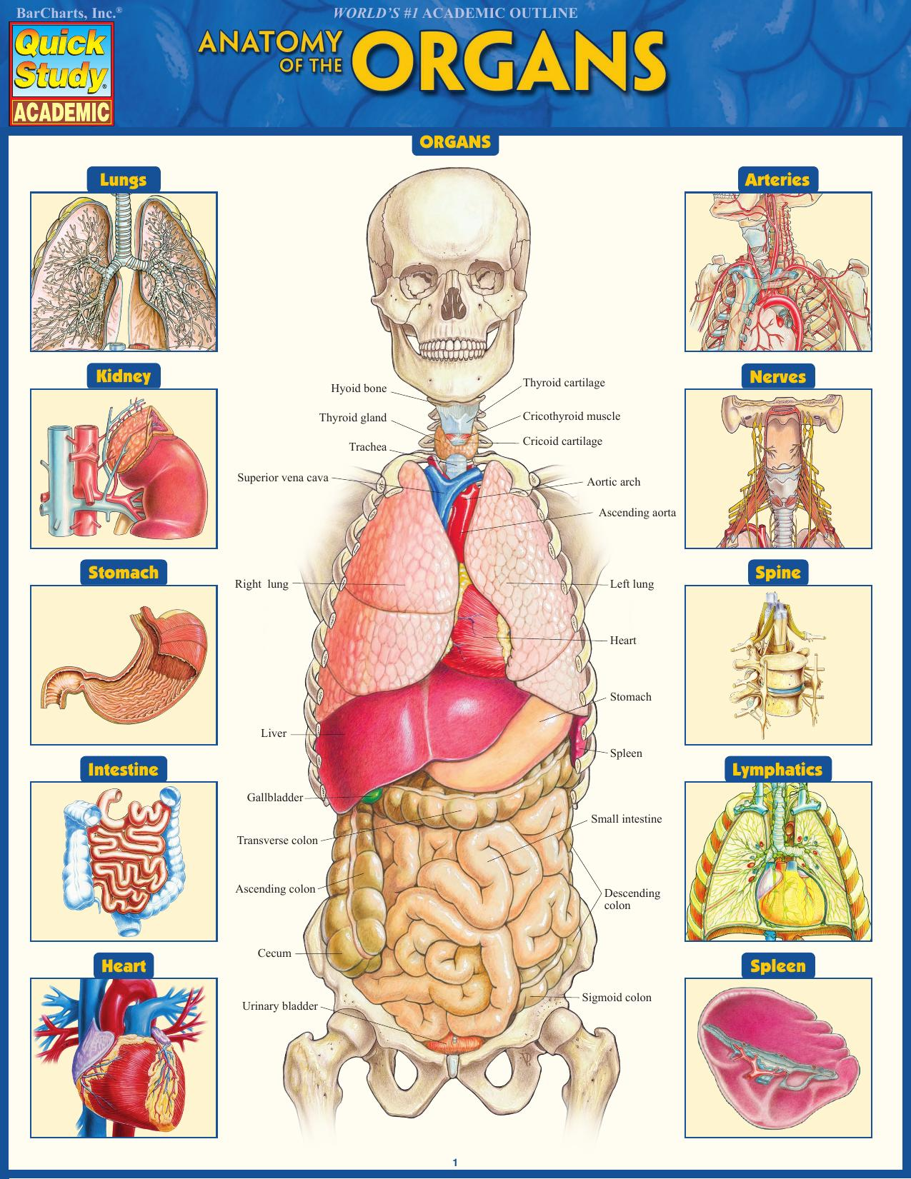 Anatomy Of The Organs Quick Study Academic Medical