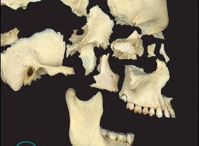 Principles of Human Anatomy