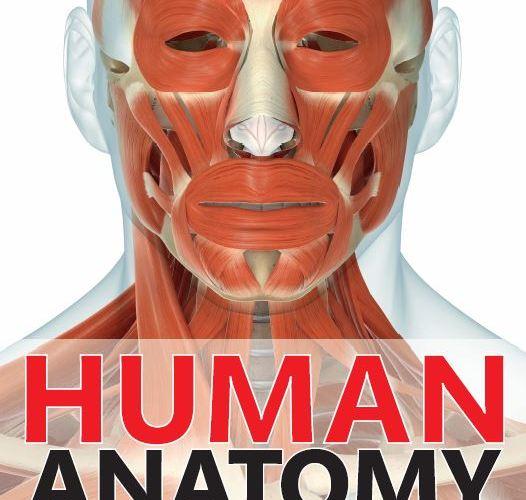 Human Anatomy The Definitive Visual Guide PDF