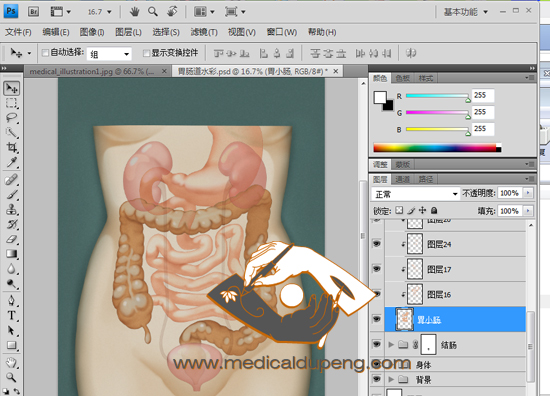 Watercolor style medical illustration in Photoshop