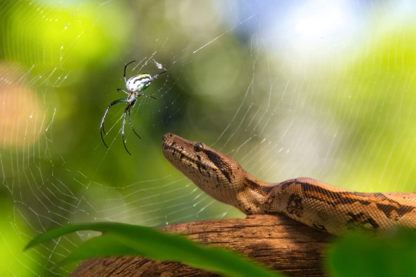 Critters and Spiders